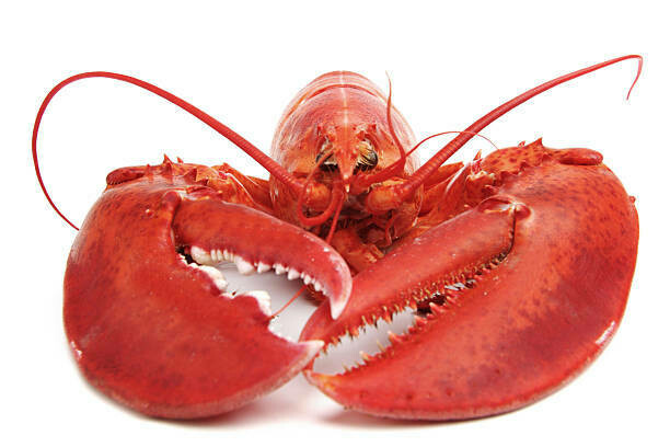 Whole Maine Lobster with Drawn Butter (cooked)