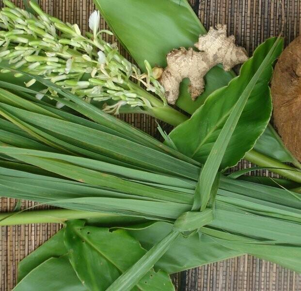 Jamaican fever grass/lemongrass 70g