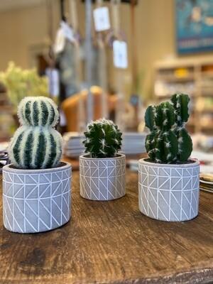 Decorative Potted Cactus