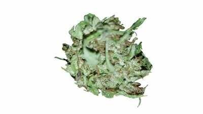 Premium CBD Blüten mit 12% CBD