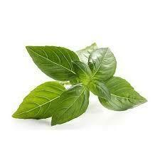 Fresh Herb Basil 1oz