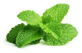 Fresh Herb Mint 1oz