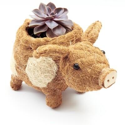Pig Planter