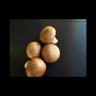 Champignon de Paris brun dès