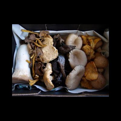 Mélange champignon avec Paris dès