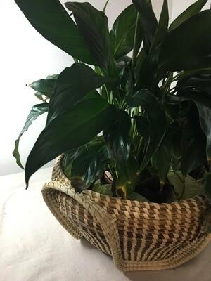 Sweetgrass Ribbed Bowl/Vase