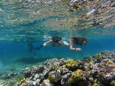 Tour de Snorkeling