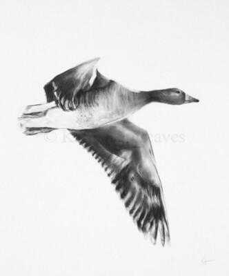 'Greylag Goose'
