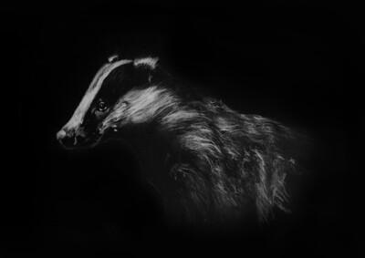 'Badger'
