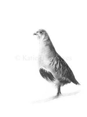'Partridge'