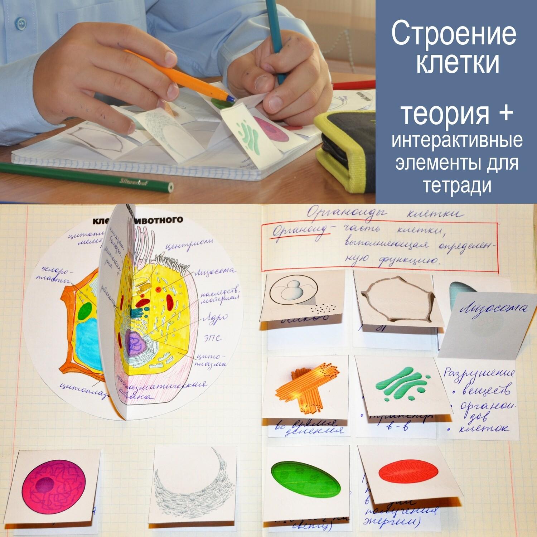 Строение клетки: теория + интерактивные элементы для тетради