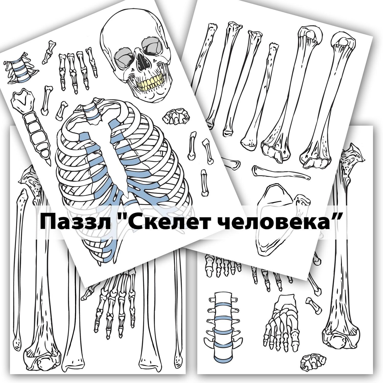 """Пазл """"Скелет человека"""""""