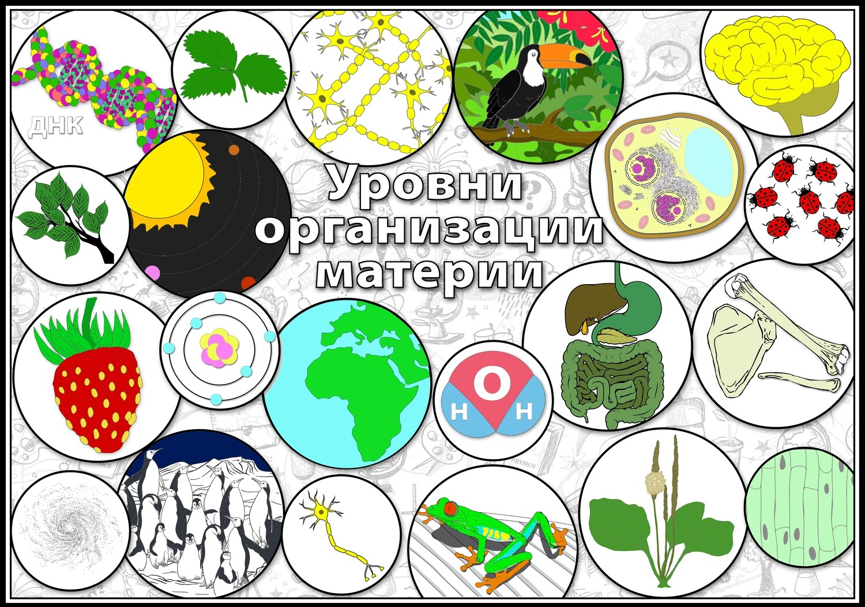 Уровни организации материи_КОЛЛАЖ_4 варианта