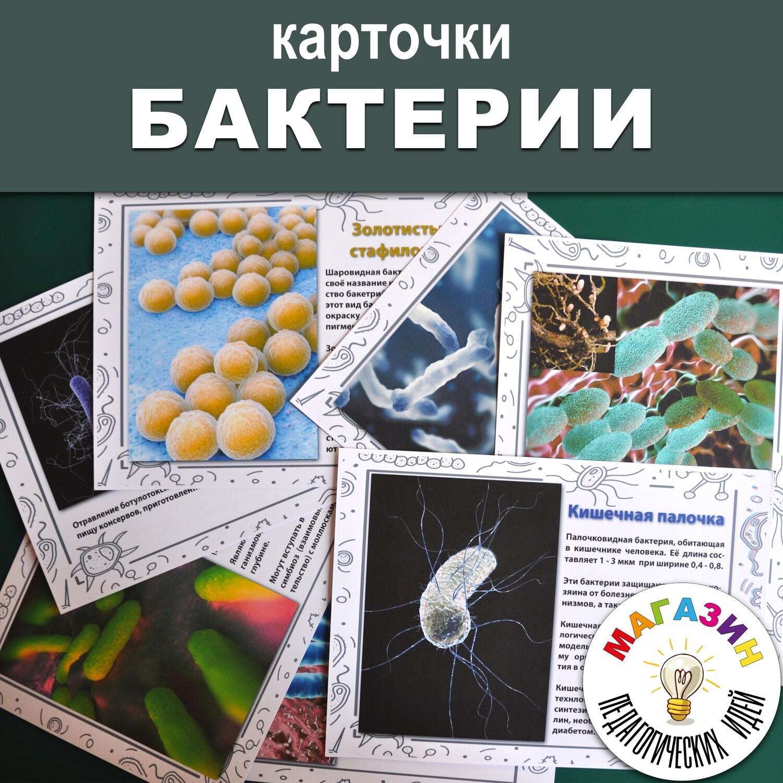 "Карточки ""БАКТЕРИИ"""