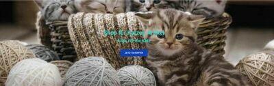 Shop für Katzenartikel - 979 Artikel - Wordpress Amazon Affiliate