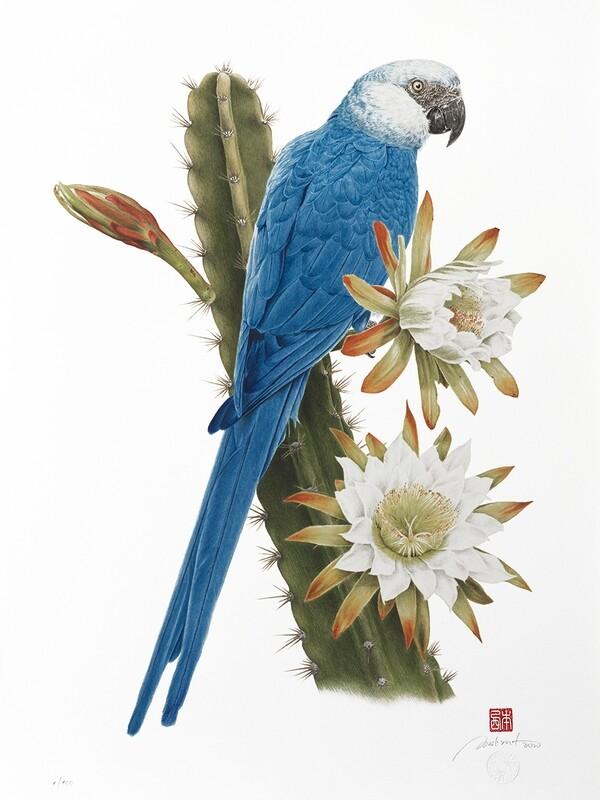 Ararinha-azul no mandacaru