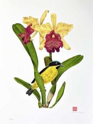 Série aves e orquídeas: Saí-amarela