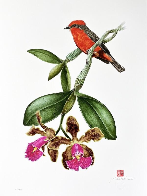 Série aves e orquídeas: Príncipe