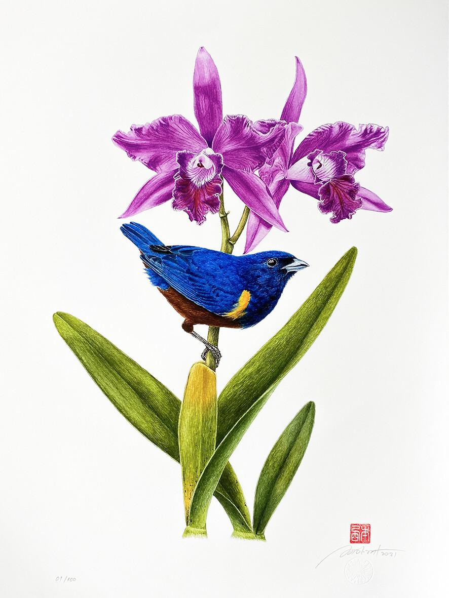 Série aves e orquídeas: Ferro-velho