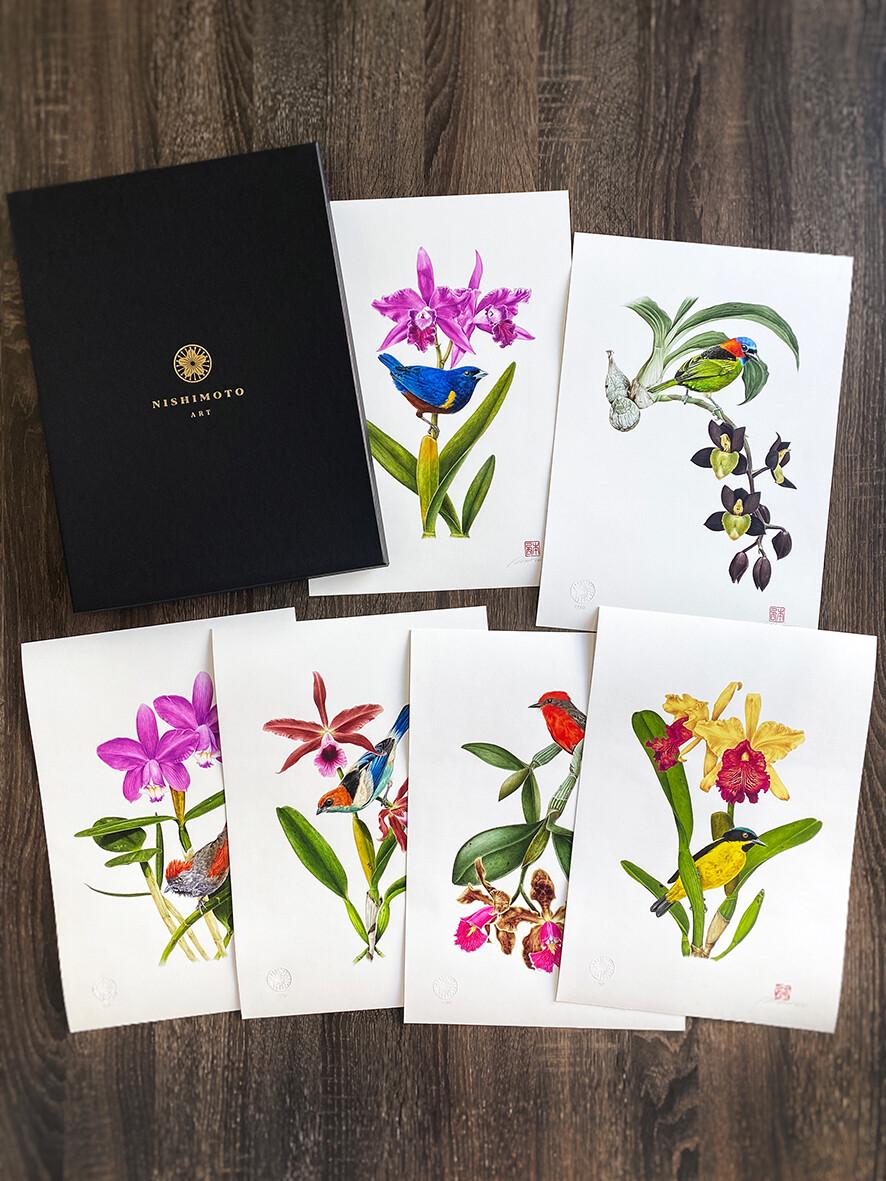 Caixa Aves e Orquídeas