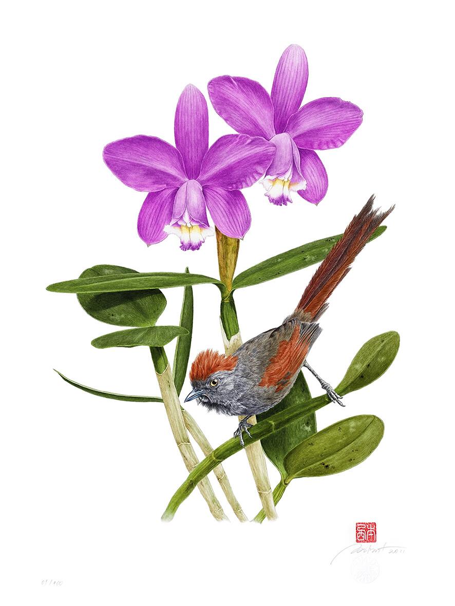 Série aves e orquídeas: Petrim