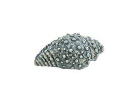 CONCHIGLIA TRITONE BLU 7cm 1018995