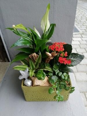 Terrine de Plantes pour l'intérieur