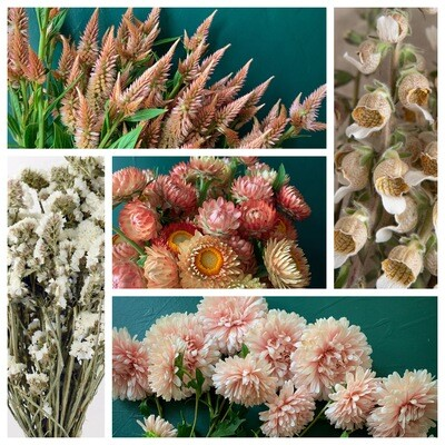 Peaches & Cream Seed Collection