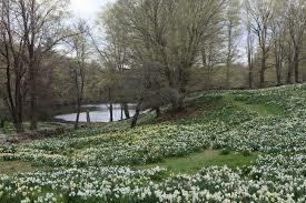 Wait List: Daffodil Mini Sessions