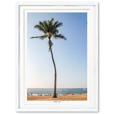Waimea Palm