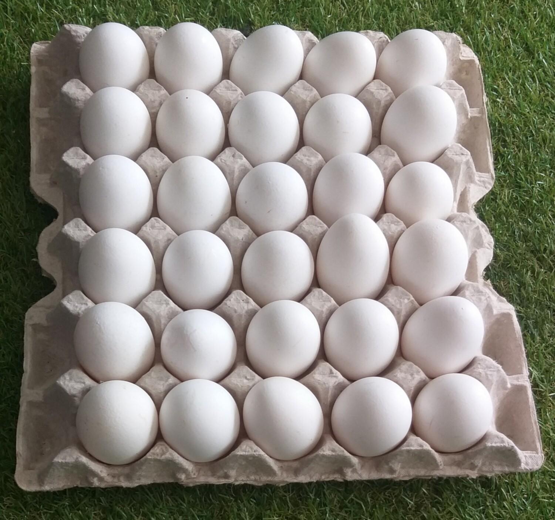 Huevos Clase A (PAQ 15 UD)