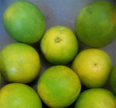 Naranjas de jugo (12 UD.)