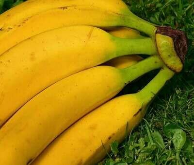 Plátano maduro (UD.)
