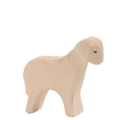Sheep, Standing