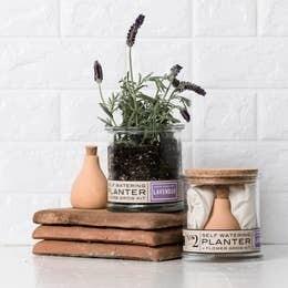 Lavender Self- Watering Grow Kit