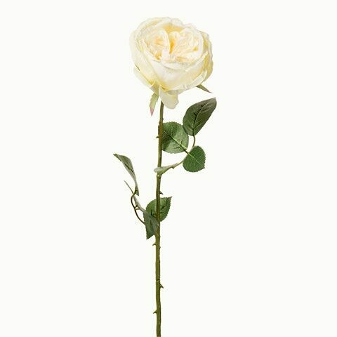 Long Stem English Rose- Soft Yellow 26 inch