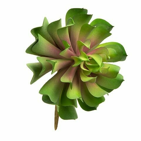 Succulant Lotus- Green/Burgundy 7 inch