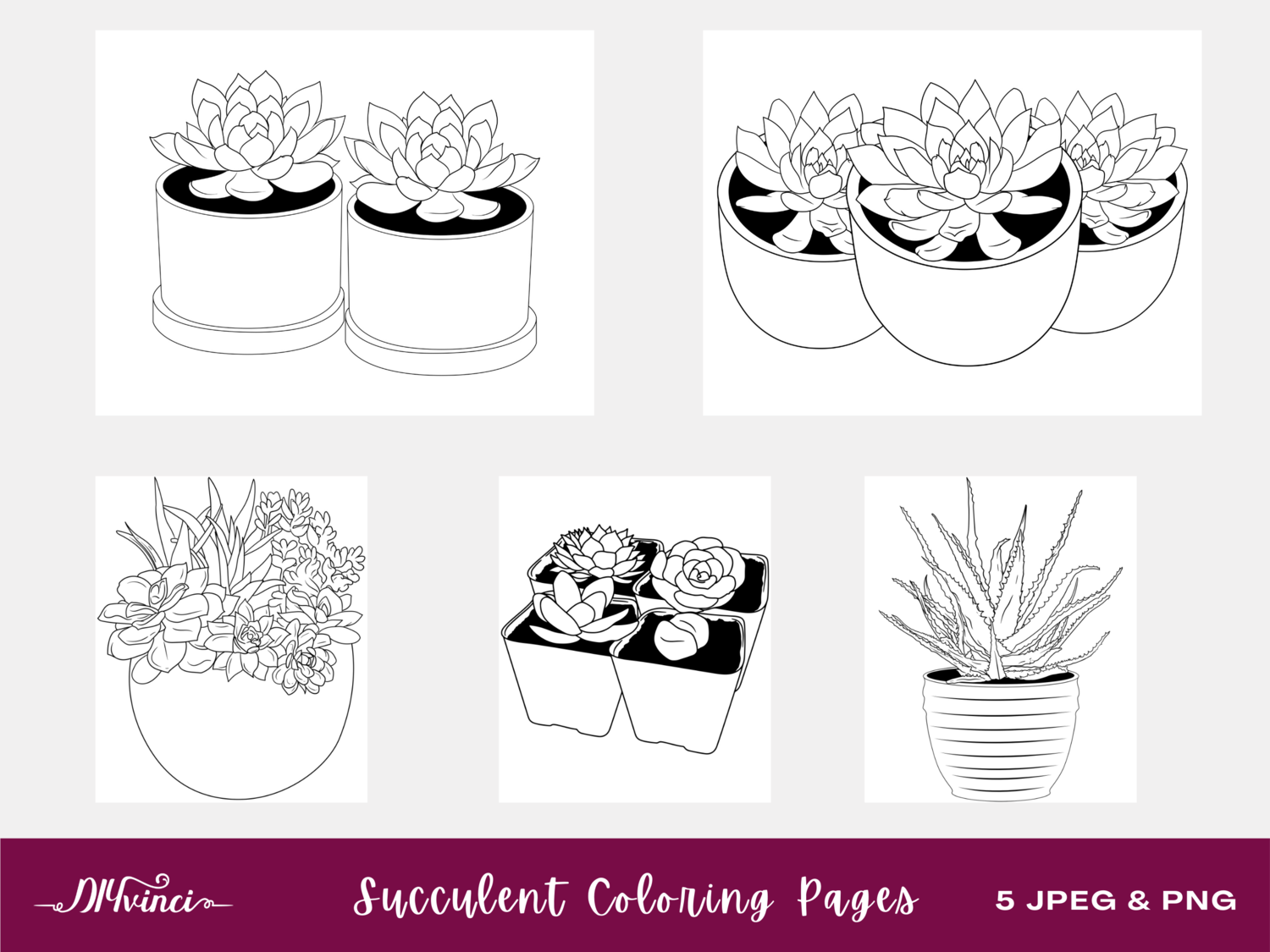 Succulent Printable Coloring Pages - JPEG & PNG - Personal and Commercial Use