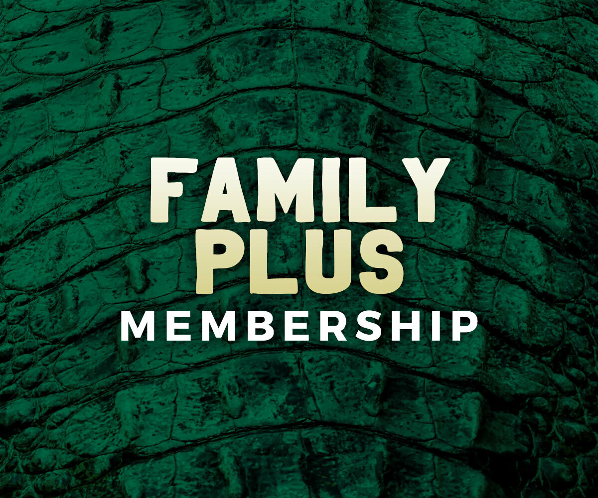 Family Plus (Two adults, all dependent children under 18, and a guest)