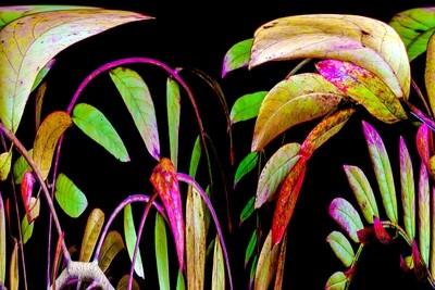 Botanical 3