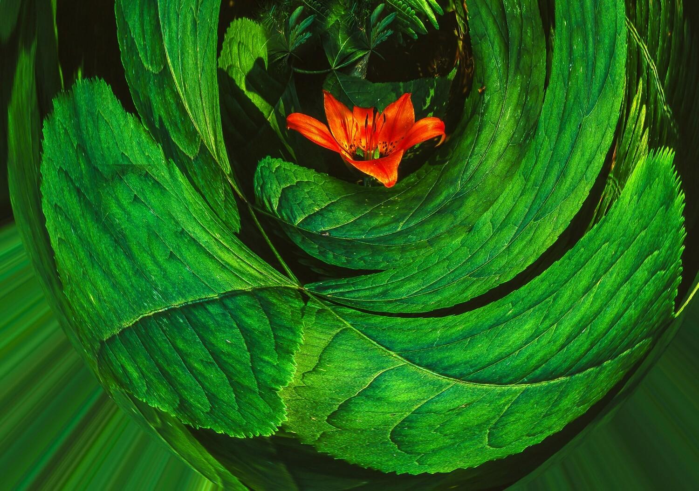 Botanical 20
