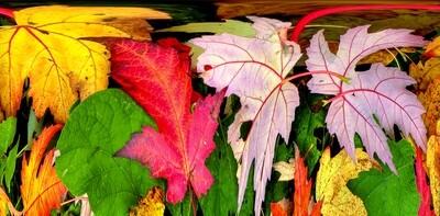 Botanical 14