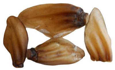 BEEF EARS  LARGE X 6  -  100% AUSTRALIAN   -  (FREE SHIPPING)