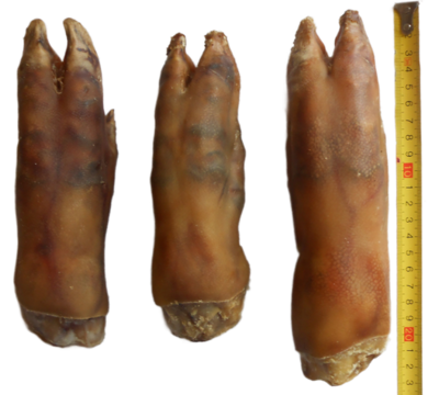 WHOLE TROTTERS X 6  - DEHYDRATED 100% AUSTRALIAN  - 100% NATURAL  -  (FREE SHIPPING)