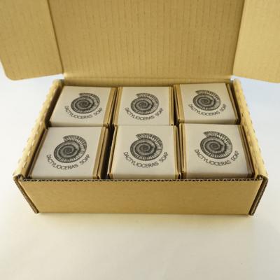 TWELVE DACTYLIOCERAS BOXES