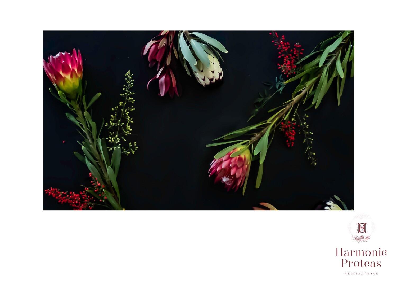 Table Cloth - Proteas