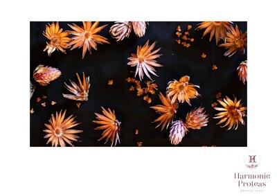 Table cloth - Winter proteas