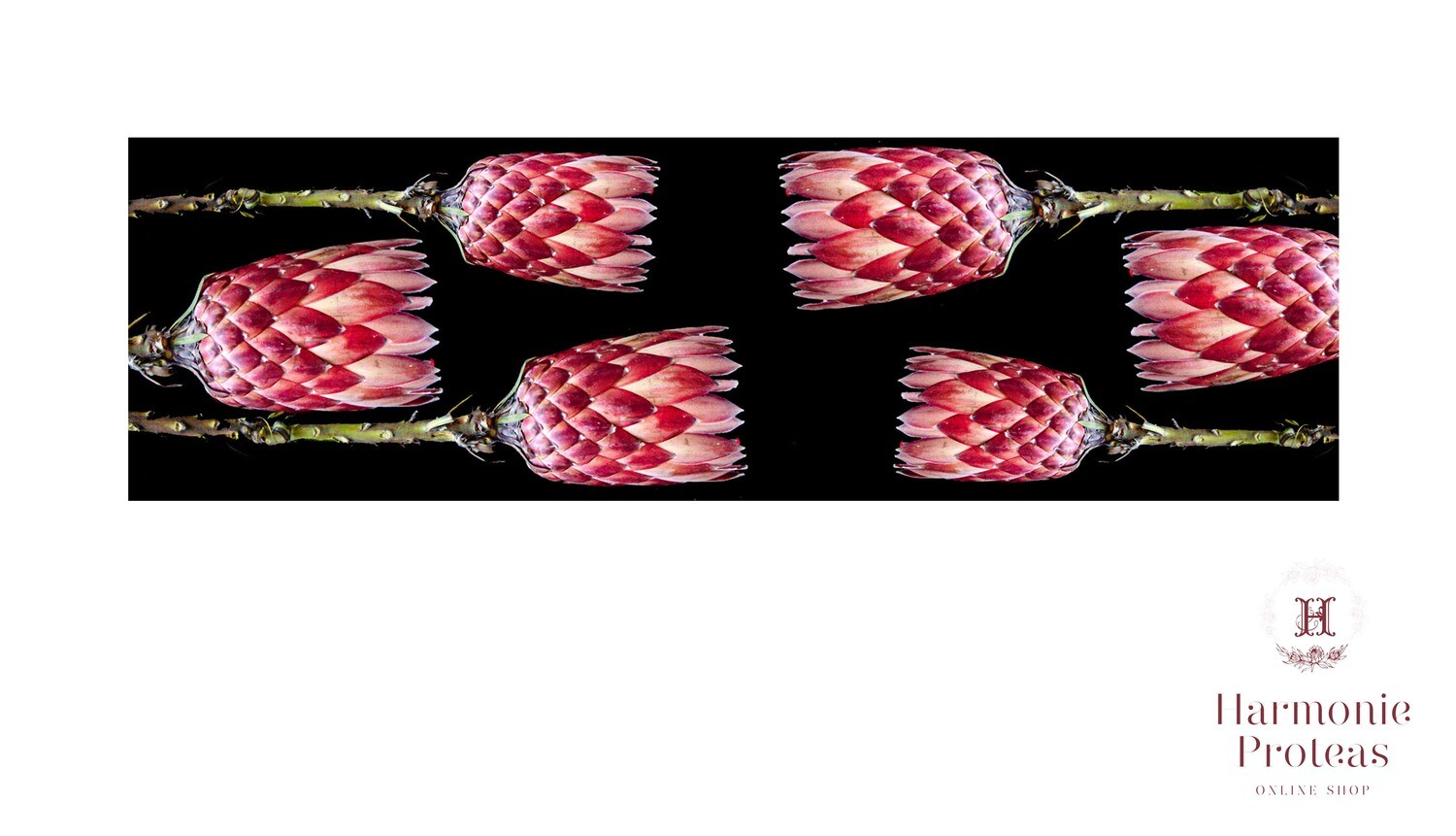 Table runner - Pink Proteas