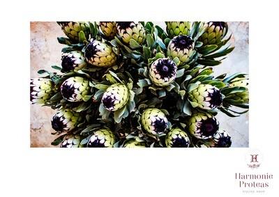 Table Cloth - Niobi Fresh Green