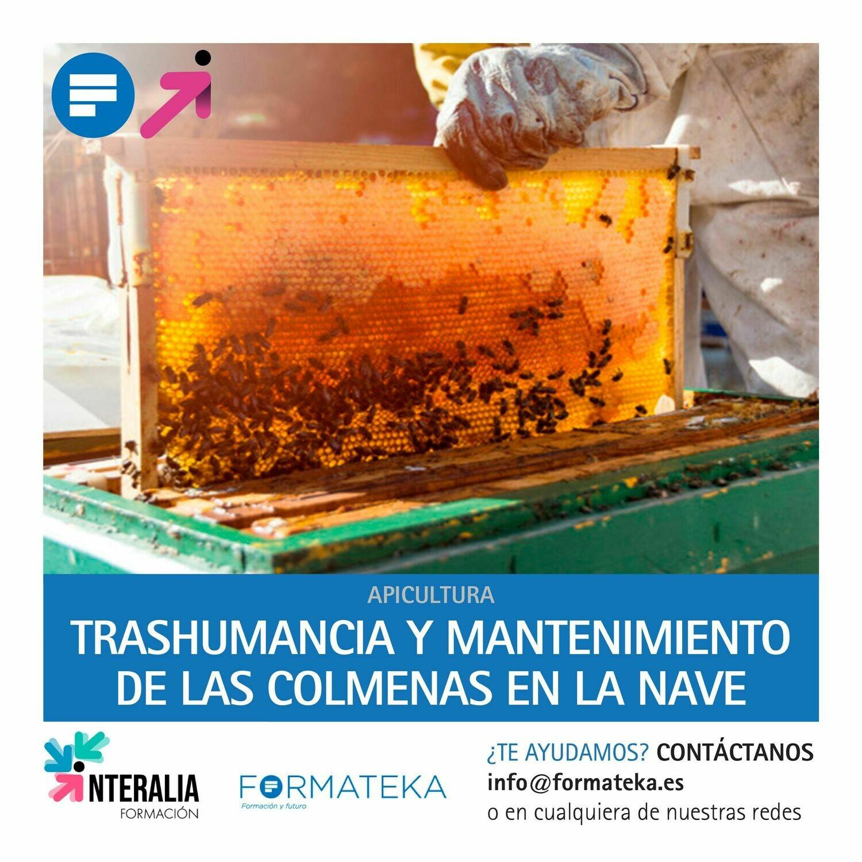 Trashumancia y mantenimiento de las colmenas en la nave (20 Horas)
